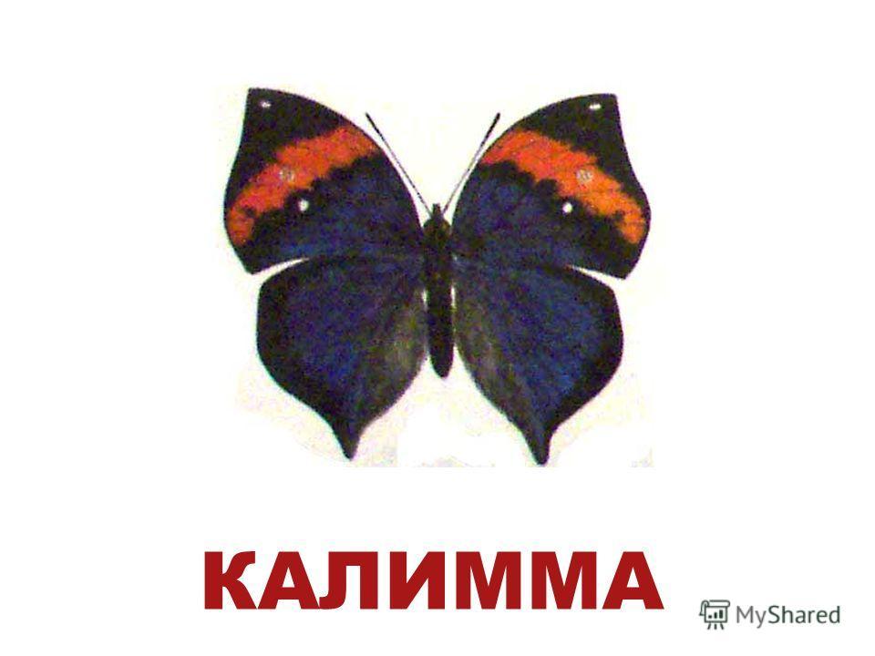 КАЛИММА