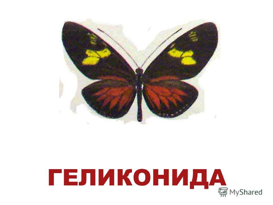 ГЕЛИКОНИДА