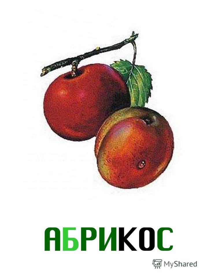 АБРИКОС Абрикос