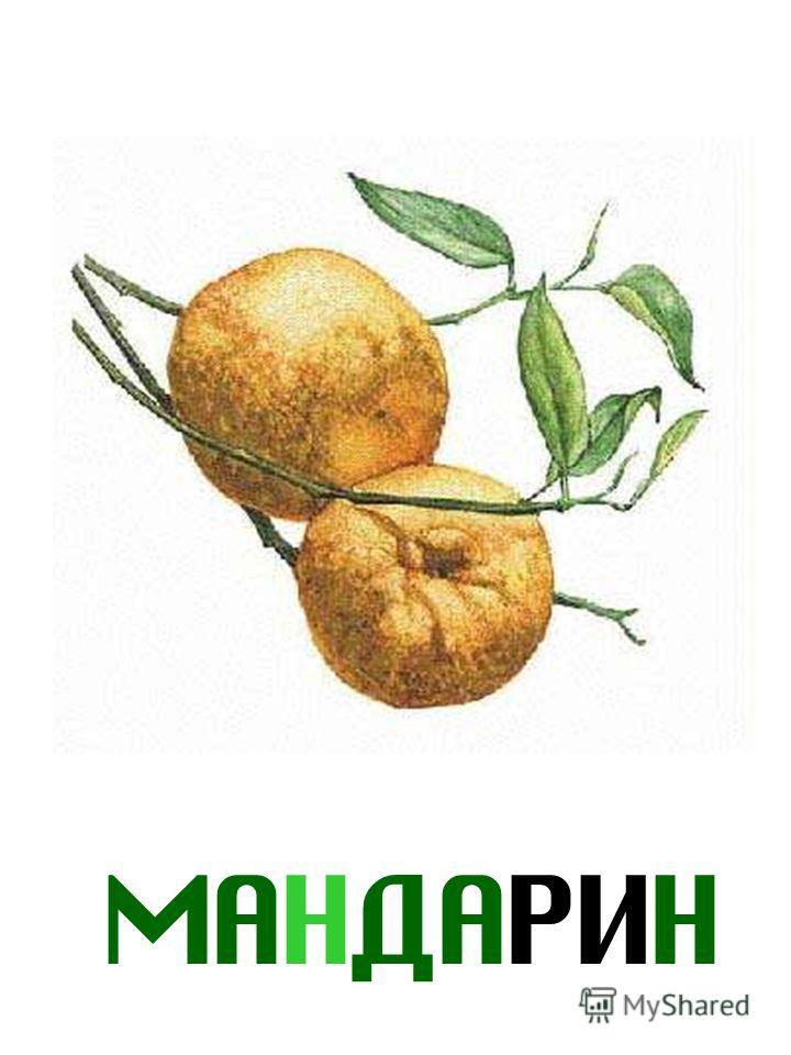 МАНДАРИН Мандарин