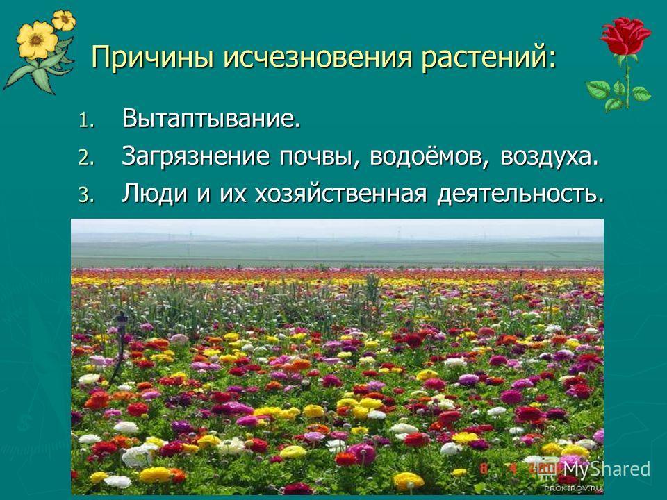 Причины исчезновения растений: 1. Вытаптывание. 2. Загрязнение почвы, водоёмов, воздуха. 3. Люди и их хозяйственная деятельность.