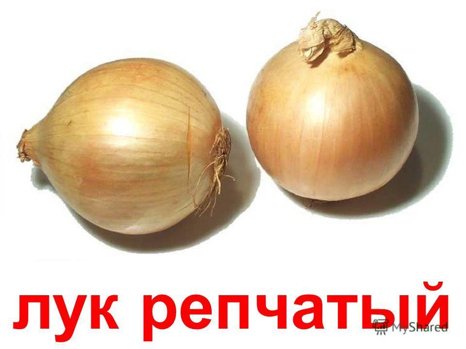 тыква Тыква