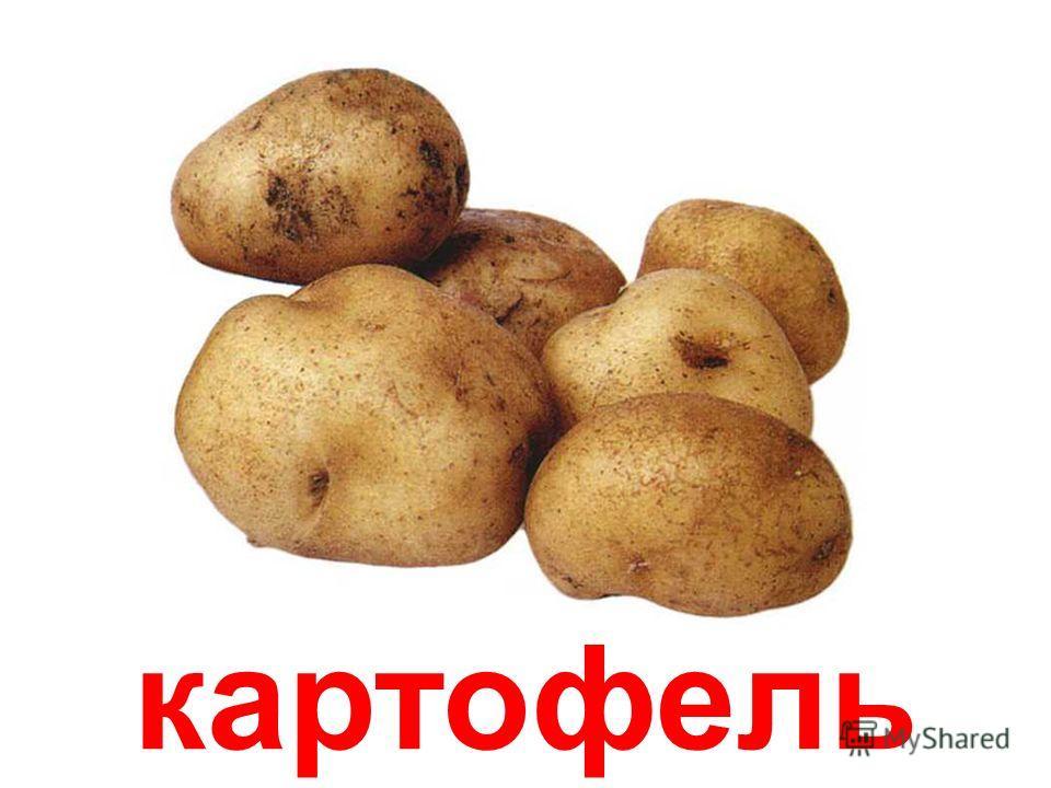 ОВОЩИ Овощи papa-vlad.narod.ru