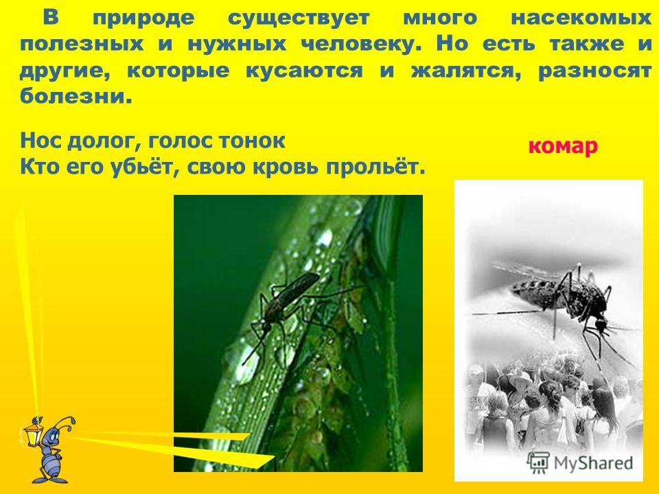 Нос долог, голос тонок Кто его убьёт, свою кровь прольёт. комар В природе существует много насекомых полезных и нужных человеку. Но есть также и другие, которые кусаются и жалятся, разносят болезни.
