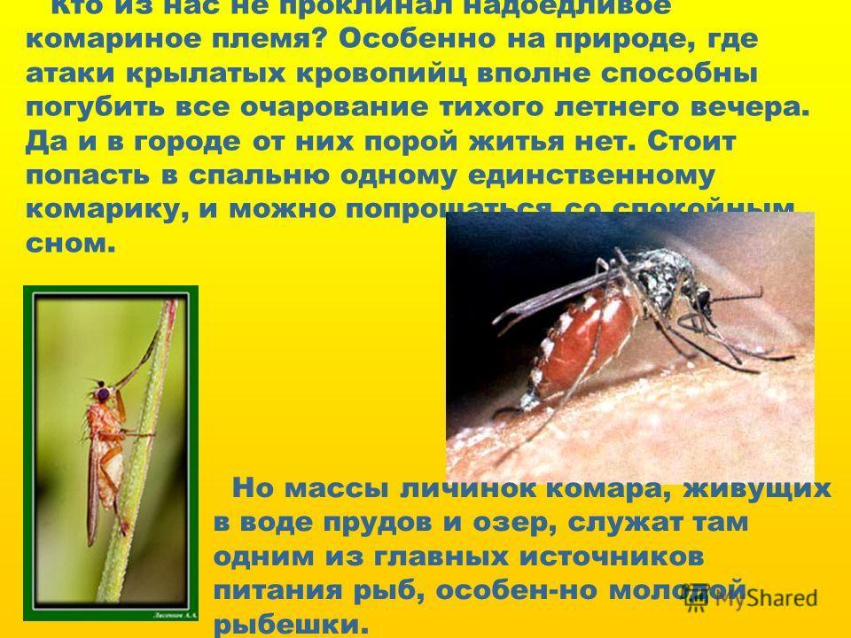 Кто из нас не проклинал надоедливое комариное племя? Особенно на природе, где атаки крылатых кровопийц вполне способны погубить все очарование тихого летнего вечера. Да и в городе от них порой житья нет. Стоит попасть в спальню одному единственному к
