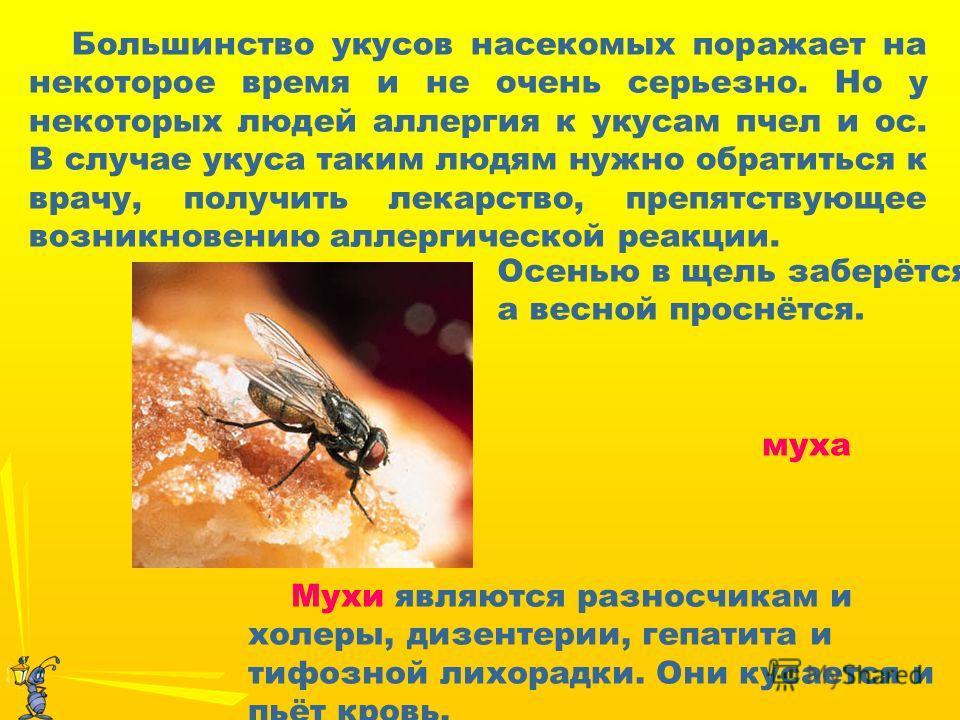 Мухи являются разносчикам и холеры, дизентерии, гепатита и тифозной лихорадки. Они кусается и пьёт кровь. Осенью в щель заберётся, а весной проснётся. Большинство укусов насекомых поражает на некоторое время и не очень серьезно. Но у некоторых людей