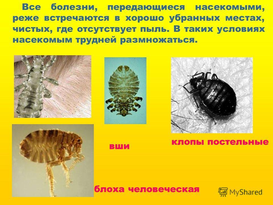 вши блоха человеческая клопы постельные Все болезни, передающиеся насекомыми, реже встречаются в хорошо убранных местах, чистых, где отсутствует пыль. В таких условиях насекомым трудней размножаться.