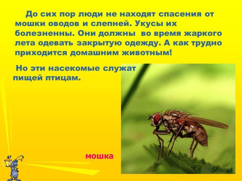 До сих пор люди не находят спасения от мошки оводов и слепней. Укусы их болезненны. Они должны во время жаркого лета одевать закрытую одежду. А как трудно приходится домашним животным! мошка Но эти насекомые служат пищей птицам.