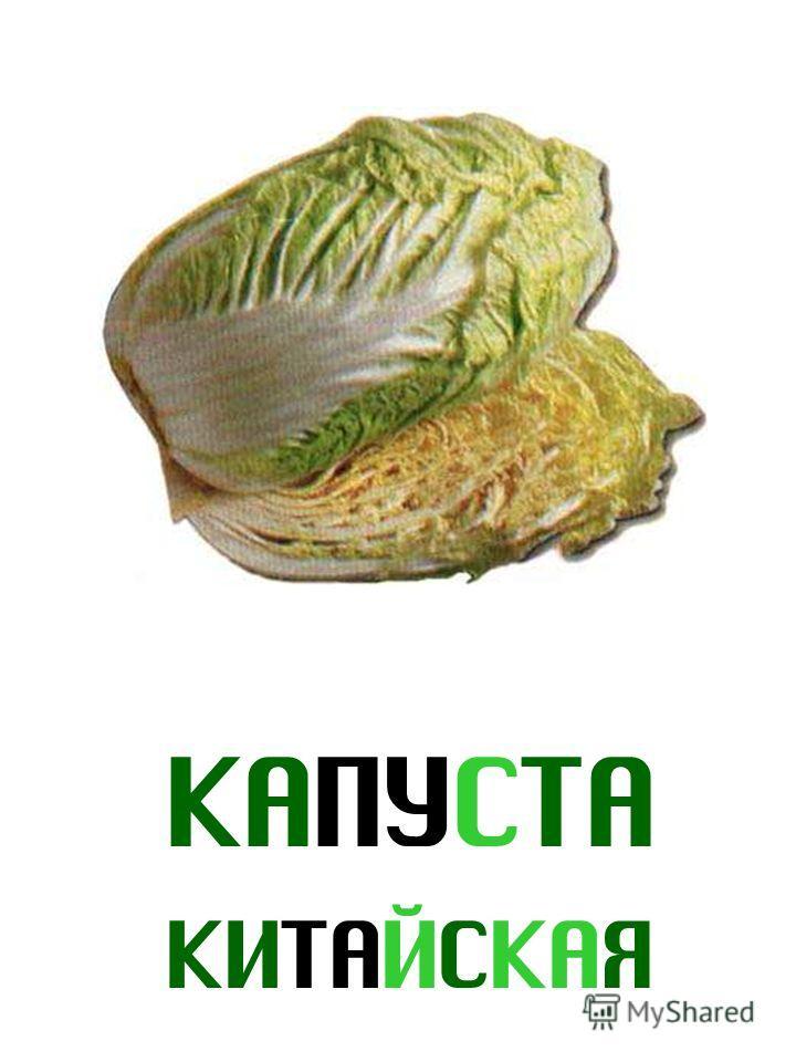 КАПУСТА КИТАЙСКАЯ Капуста китайская