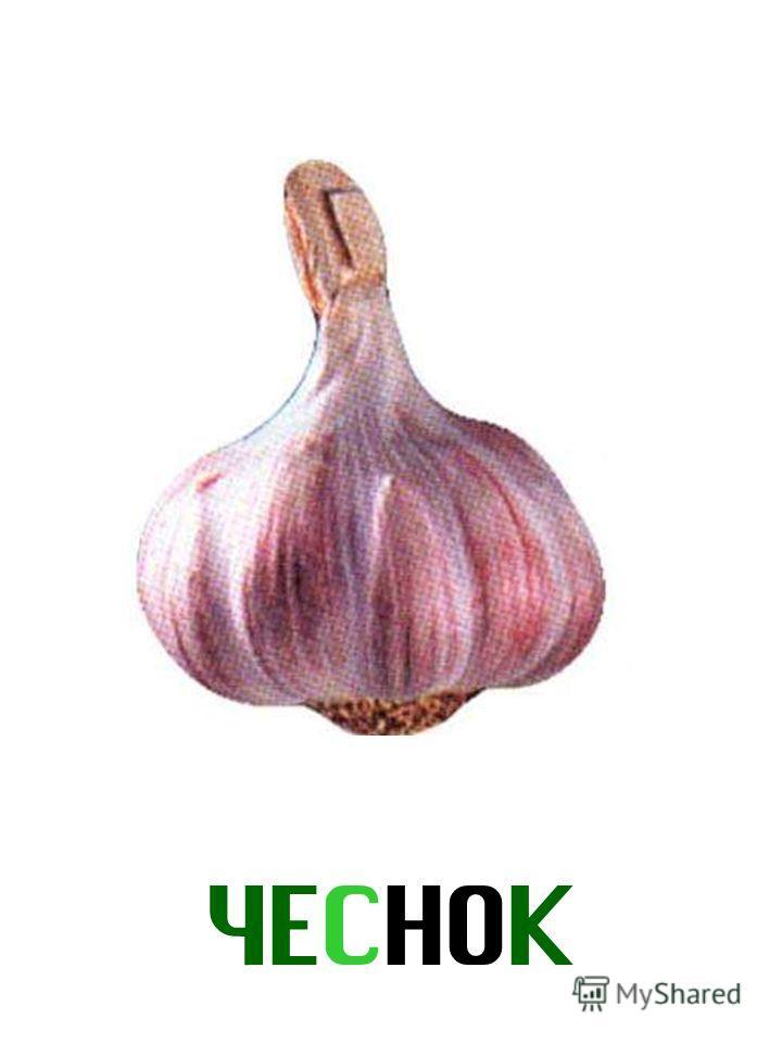 ЧЕСНОК Чеснок