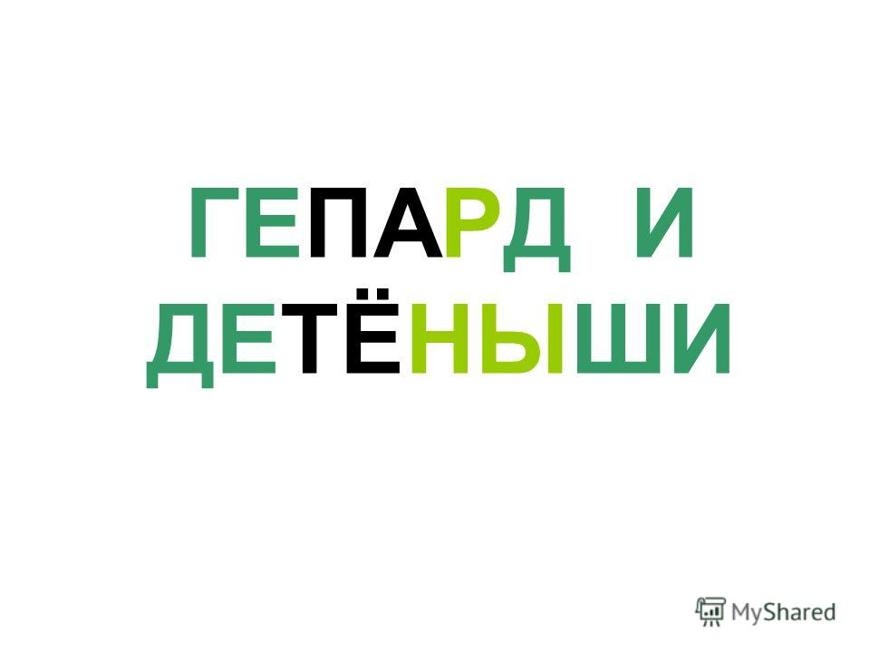 ГЕПАРД И ДЕТЁНЫШИ