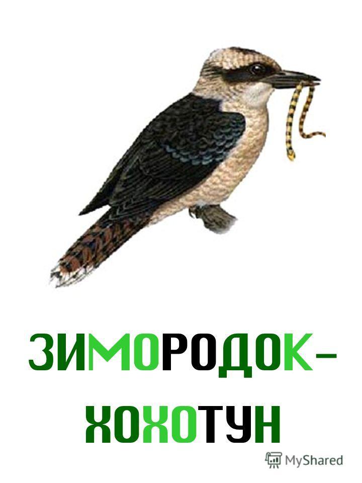 ЗИМОРОДОК- ХОХОТУН