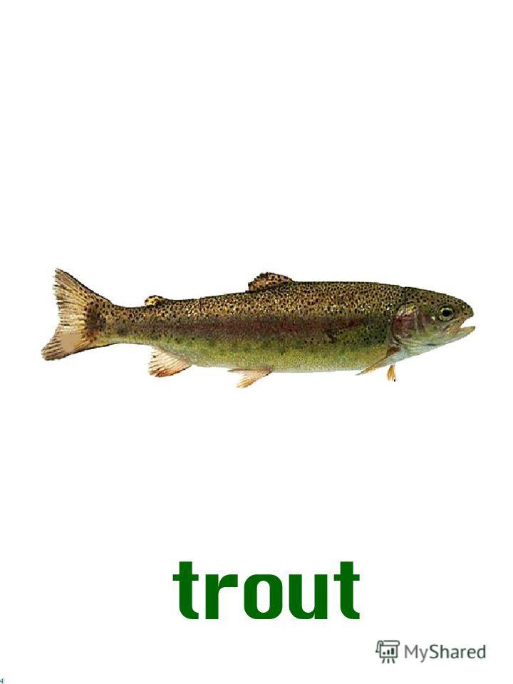 Рыбы английский язык pike trout cod mackerel