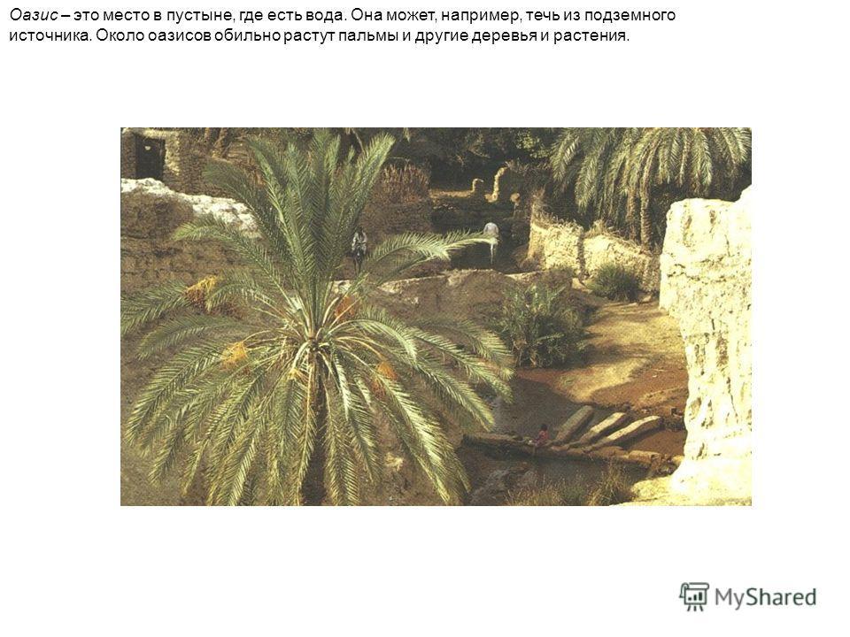 Оазис – это место в пустыне, где есть вода. Она может, например, течь из подземного источника. Около оазисов обильно растут пальмы и другие деревья и растения.