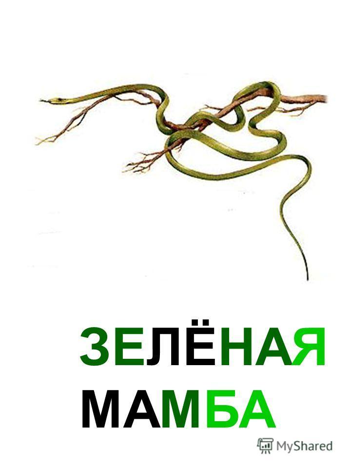 ЗЕЛЁНАЯ МАМБА