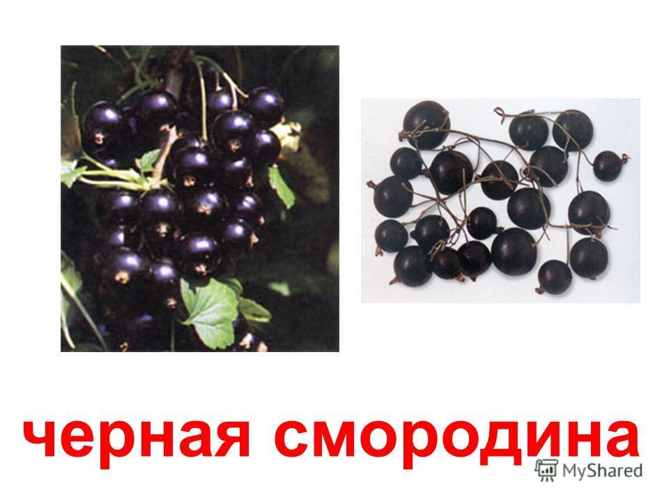 черная смородина