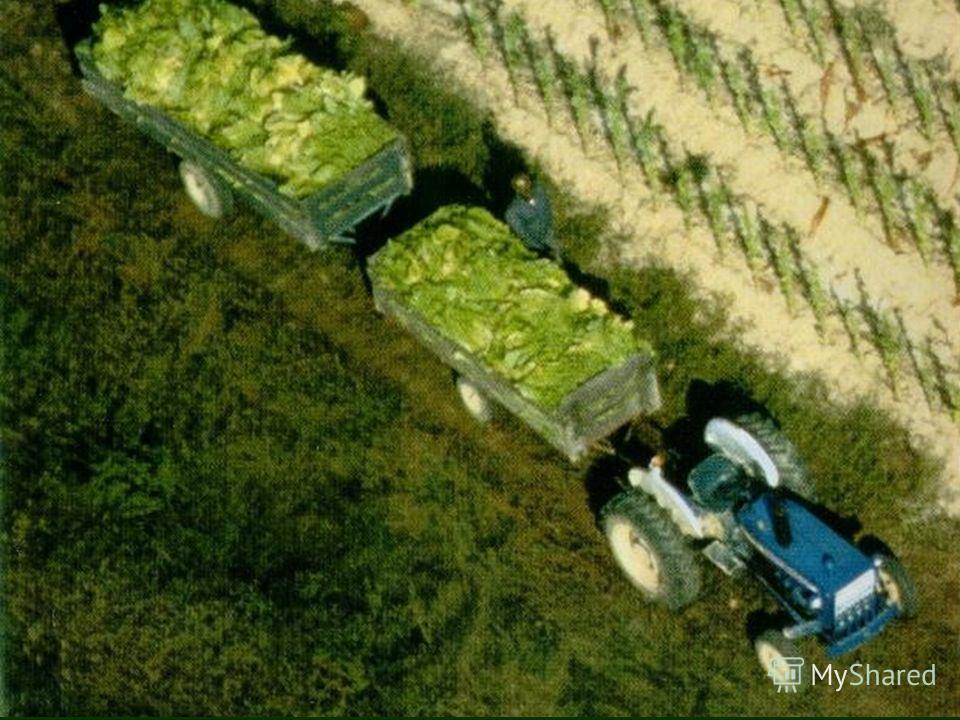Трактор – мощная, большая машина. Тракторы могут тянуть за собой груз.