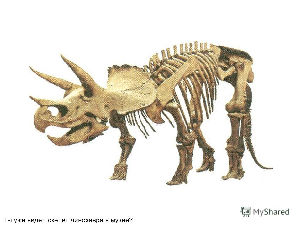 Ты уже видел скелет динозавра в музее?