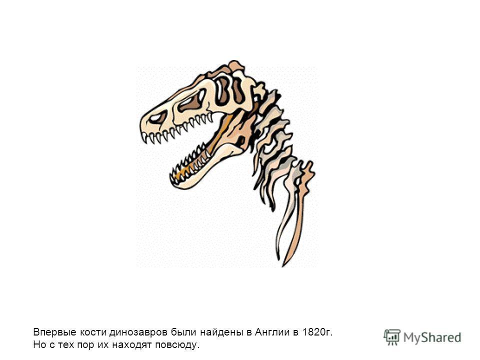 Впервые кости динозавров были найдены в Англии в 1820 г. Но с тех пор их находят повсюду.