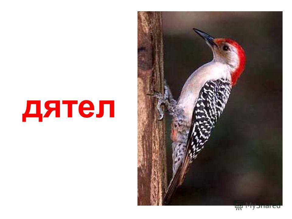 озвученные птицы Озвученные птицы papa-vlad.narod.ru