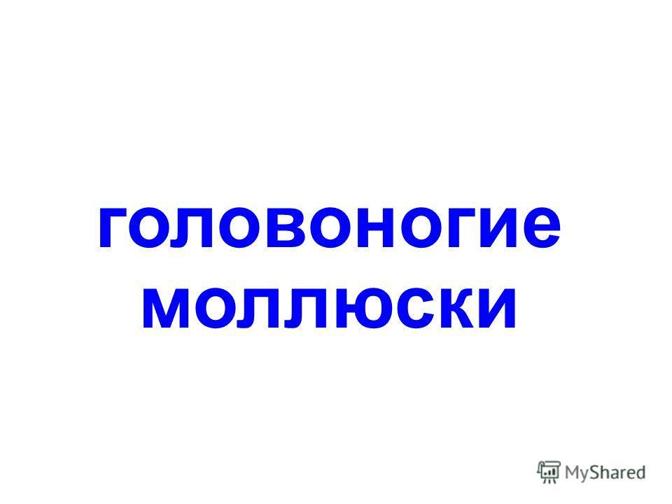 беспозвоночные Беспозвоночные papa-vlad.narod.ru