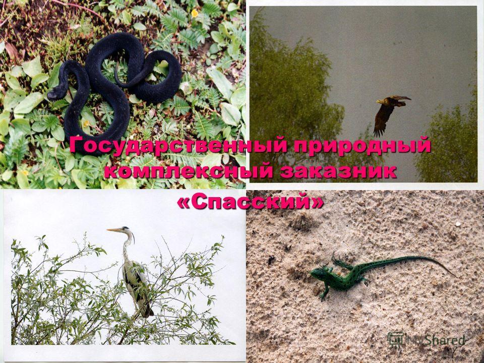 Государственный природный комплексный заказник «Спасский»