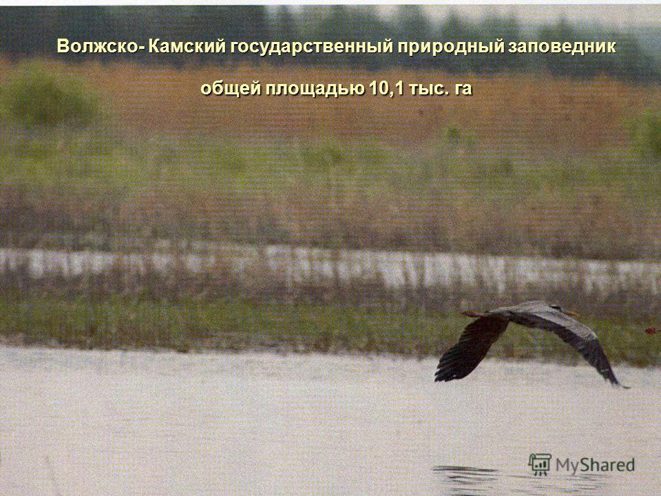 Волжско- Камский государственный природный заповедник общей площадью 10,1 тыс. га