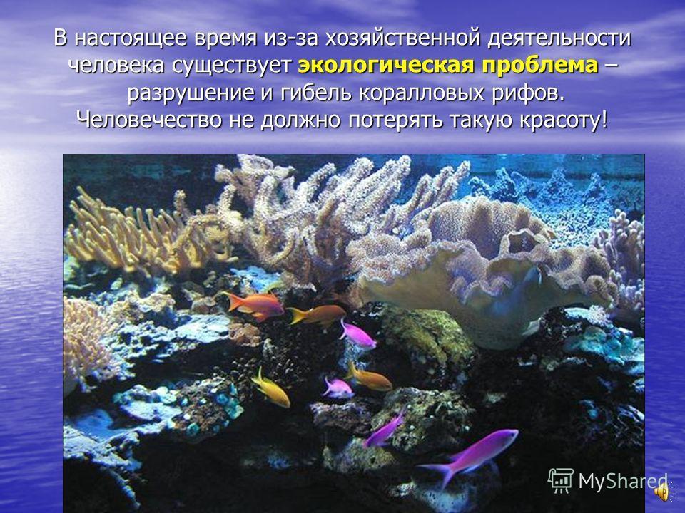 Коралловых рифов довольно много в Индийском океане, а также у берегов Австралии и Сицилии.