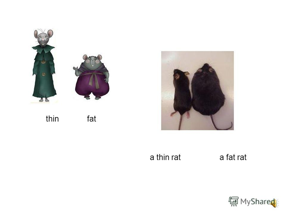 a black cat and a rat a white cat and a rat