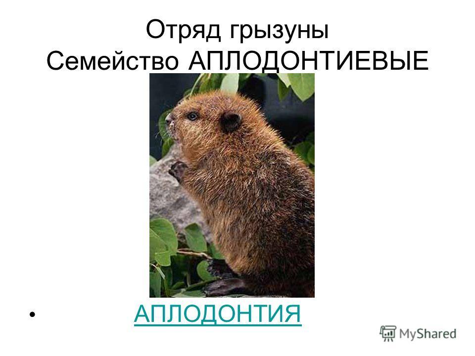 Отряд грызуны Семейство АПЛОДОНТИЕВЫЕ АПЛОДОНТИЯ