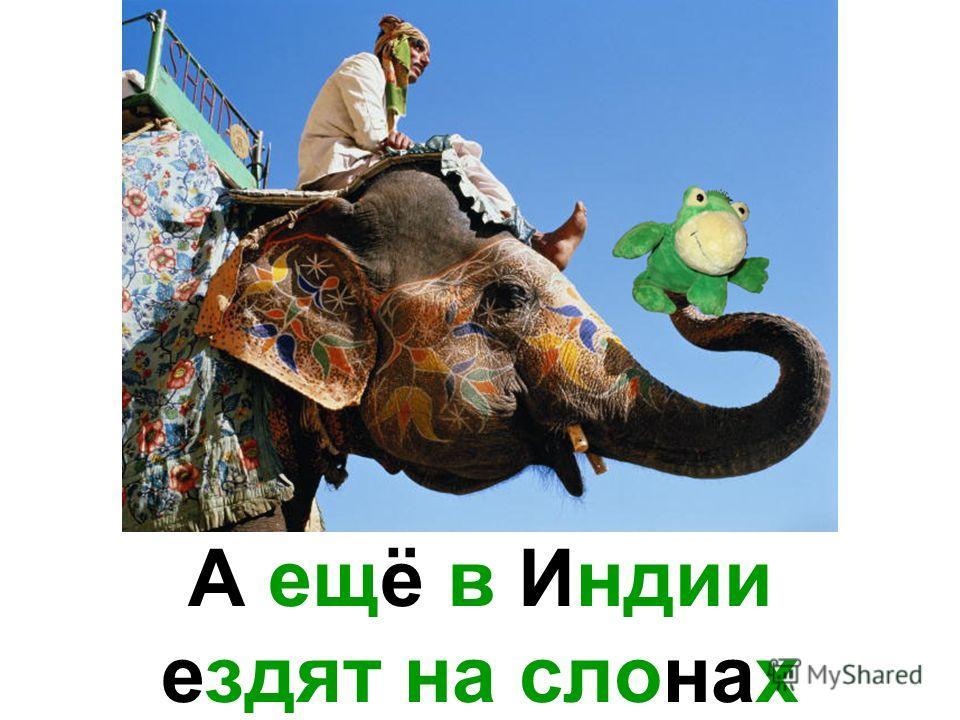 А ещё в Индии ездят на слонах