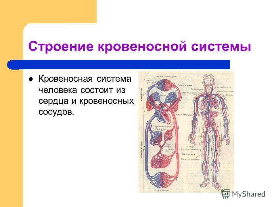 Строение кровеносной системы Кровеносная система человека состоит из сердца и кровеносных сосудов.