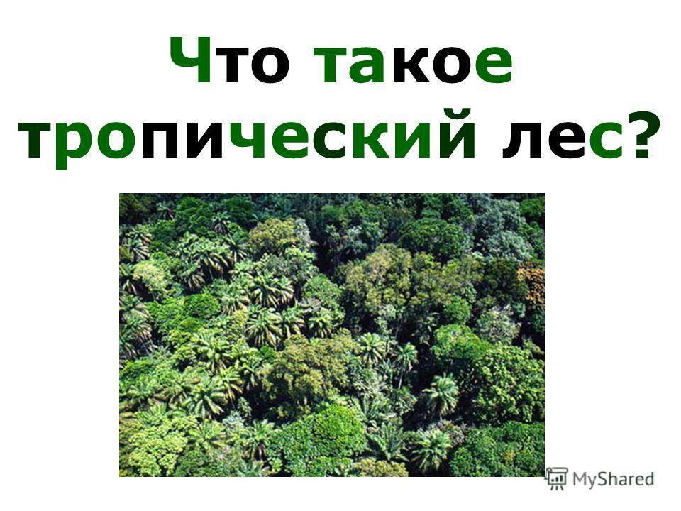 Что такое тропический лес?