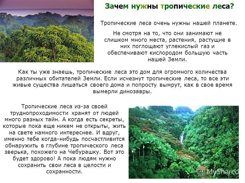 Зачем нужны тропические леса? Тропические леса очень нужны нашей планете. Не смотря на то, что они занимают не слишком много места, растения, растущие в них поглощают углекислый газ и обеспечивают кислородом большую часть нашей Земли. Как ты уже знае