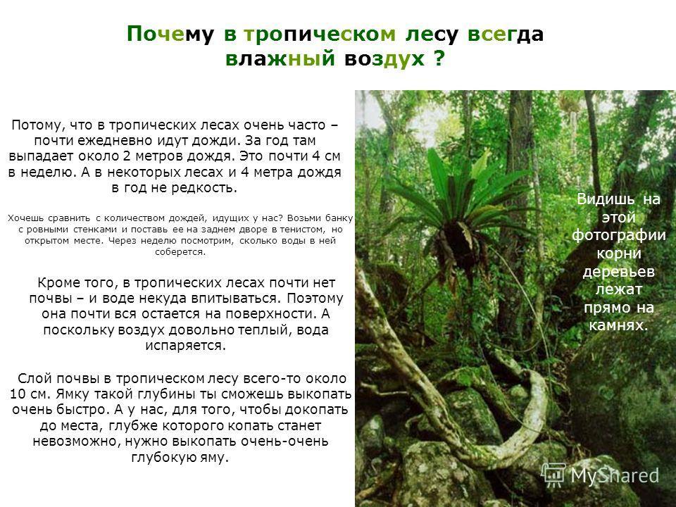Почему в тропическом лесу всегда влажный воздух ? Потому, что в тропических лесах очень часто – почти ежедневно идут дожди. За год там выпадает около 2 метров дождя. Это почти 4 см в неделю. А в некоторых лесах и 4 метра дождя в год не редкость. Хоче