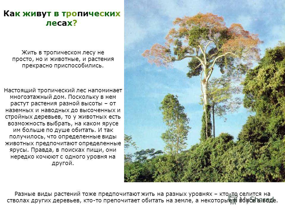 Как живут в тропических лесах? Жить в тропическом лесу не просто, но и животные, и растения прекрасно приспособились. Настоящий тропический лес напоминает многоэтажный дом. Поскольку в нем растут растения разной высоты – от наземных и наводных до выс