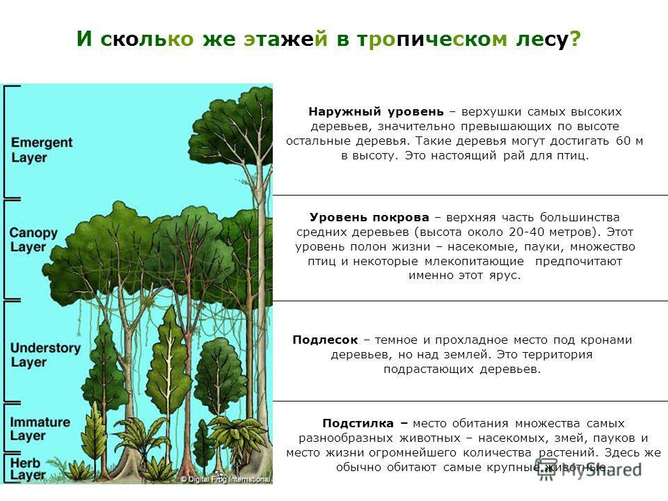 Уровень покрова – верхняя часть большинства средних деревьев (высота около 20-40 метров). Этот уровень полон жизни – насекомые, пауки, множество птиц и некоторые млекопитающие предпочитают именно этот ярус. Подстилка – место обитания множества самых