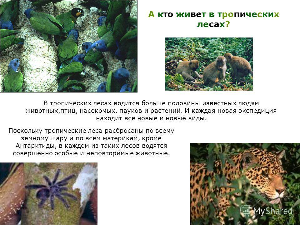 В тропических лесах водится больше половины известных людям животных,птиц, насекомых, пауков и растений. И каждая новая экспедиция находит все новые и новые виды. А кто живет в тропических лесах? Поскольку тропические леса разбросаны по всему земному