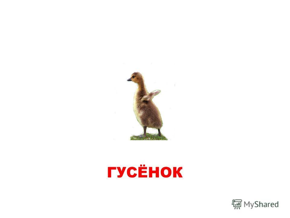 ГУСЕНОК