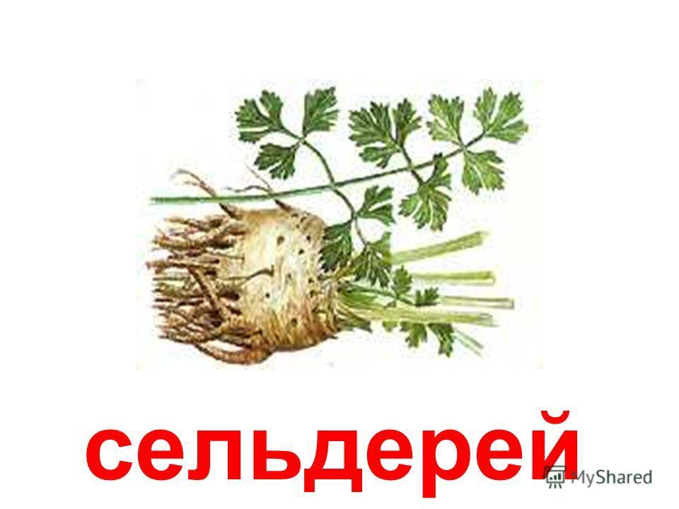 листовой сельдерей Листовой сельдерей