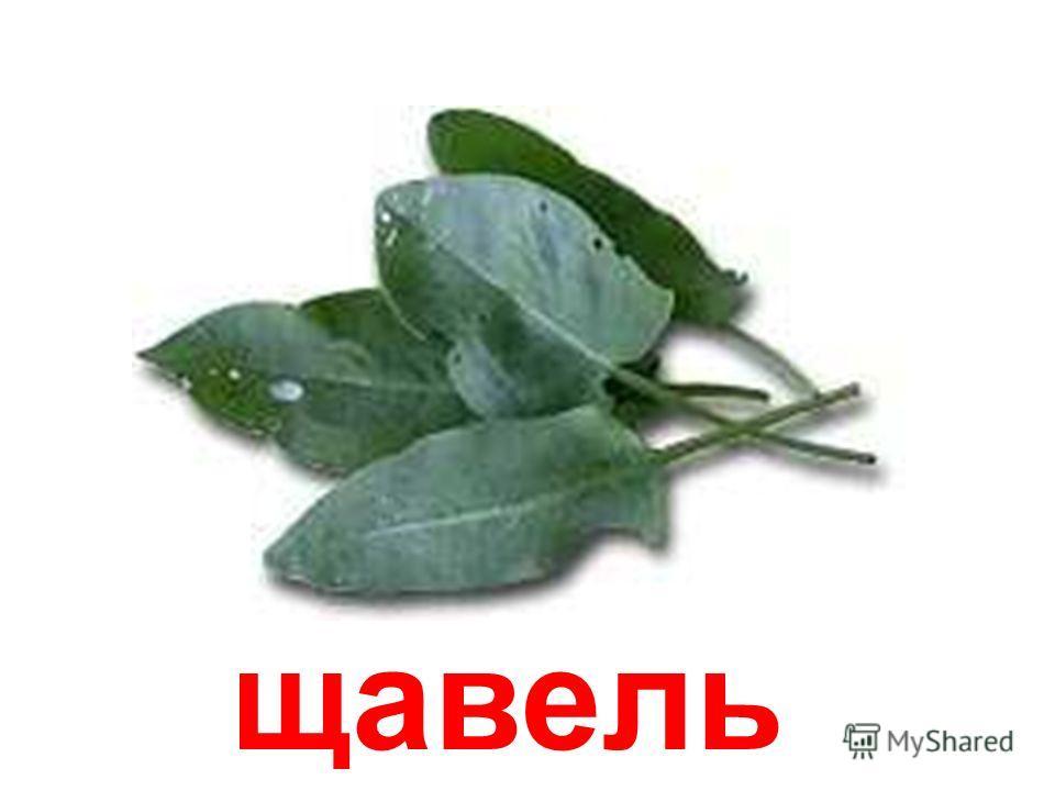 шпинат Шпинат