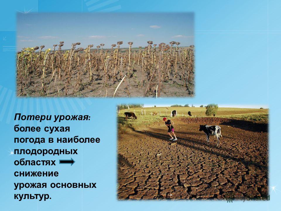 Потери урожая : более сухая погода в наиболее плодородных областях снижение урожая основных культур.