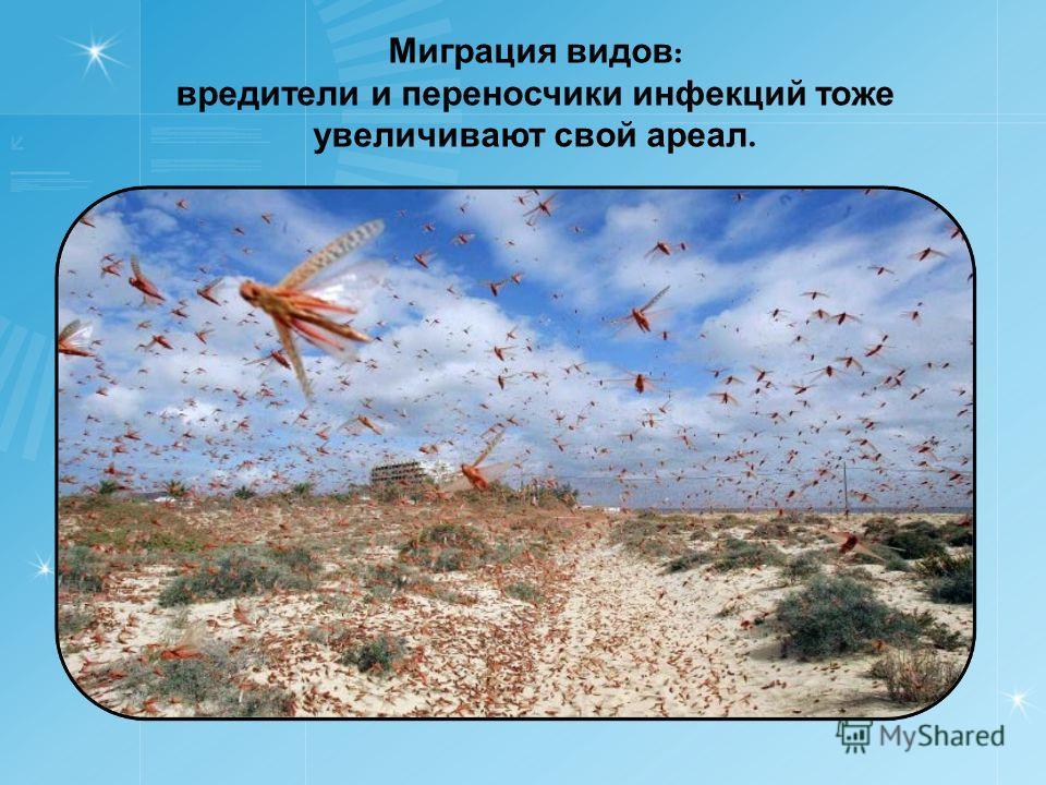 Миграция видов : вредители и переносчики инфекций тоже увеличивают свой ареал.