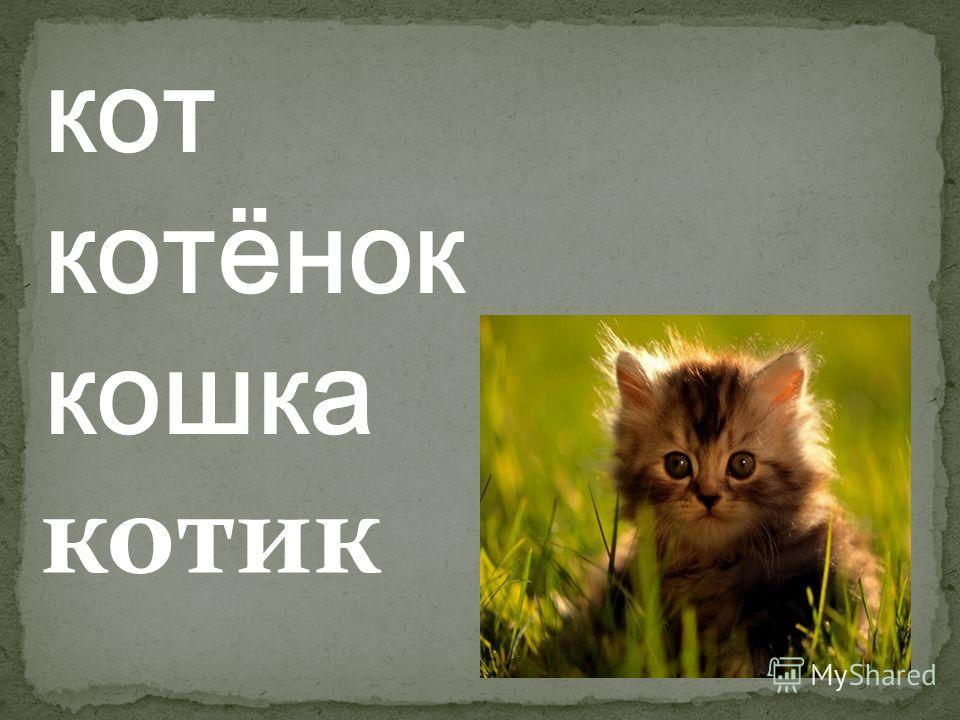 кот котёнок кошка котик