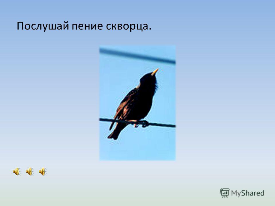 Когда к нам прилетают перелётные птицы? - Перелётные пти ́ цы прилета ́ ют весна ́ ей. Что строййяд птицы? - Пти ́ цы стройй ́ яд гнёзда. Из чего птицы делают гнёзда? - Из ве ́ ток и травы ́.