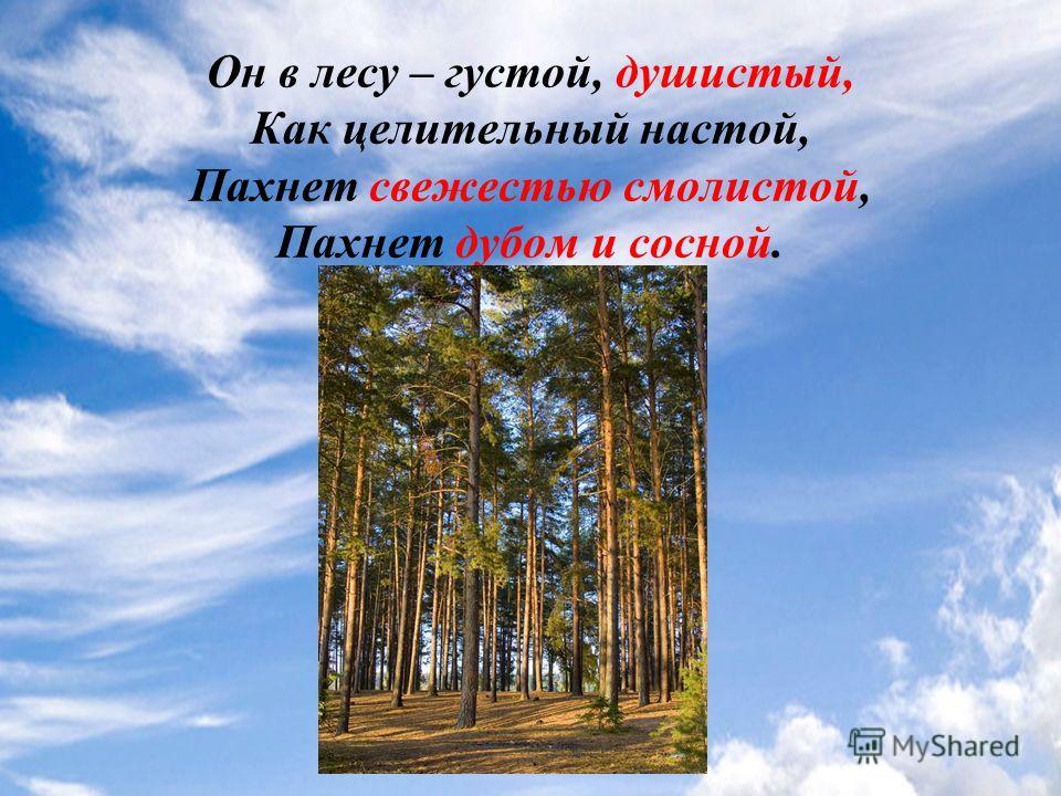 Он в лесу – густой, душистый, Как целительный настой, Пахнет свежестью смолистой, Пахнет дубом и сосной.