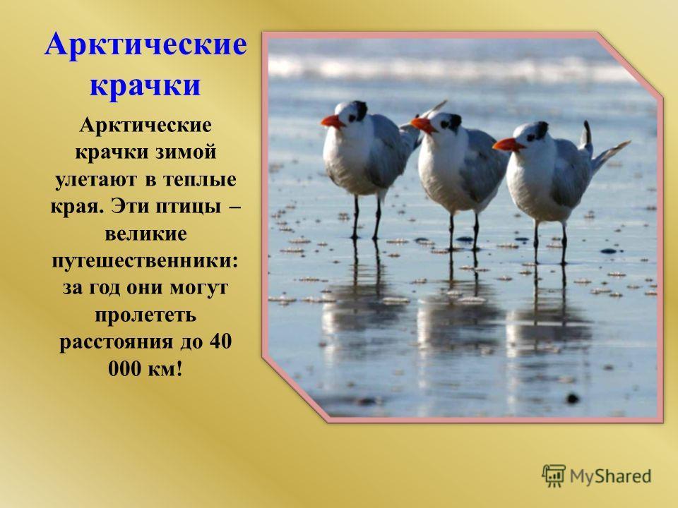 Доклад о животном арктики 4 класс
