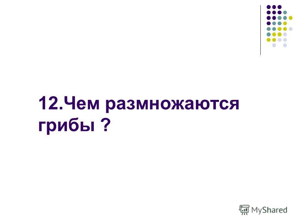 12. Чем размножаются грибы ?