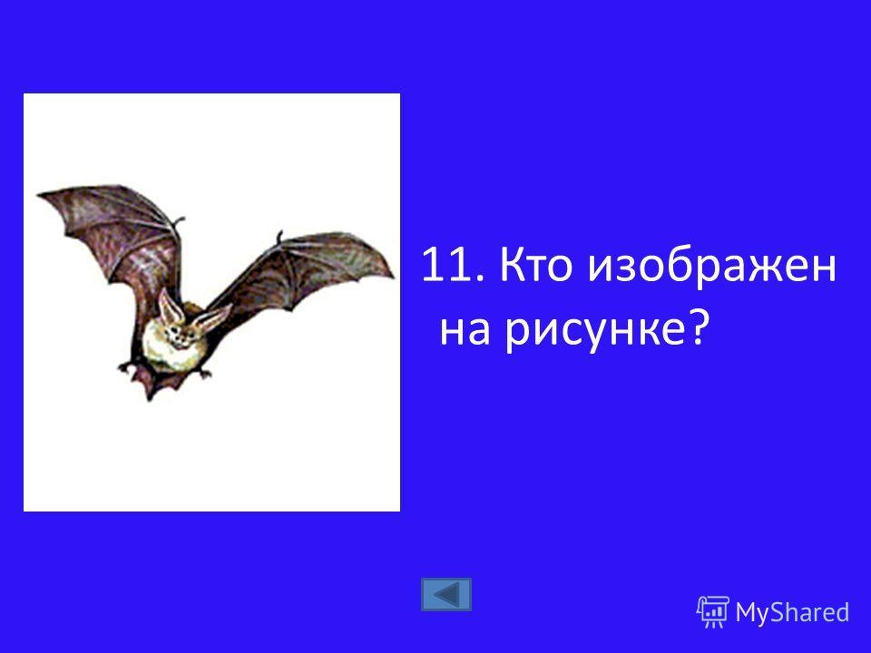 11. Кто изображен на рисунке?