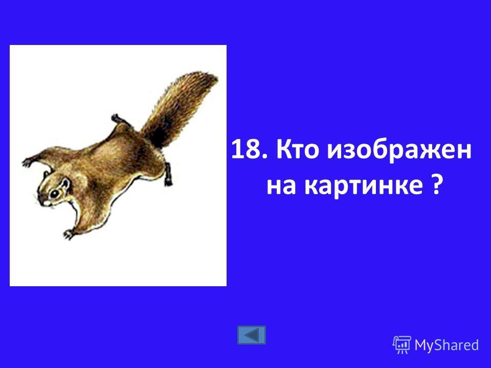 18. Кто изображен на картинке ?